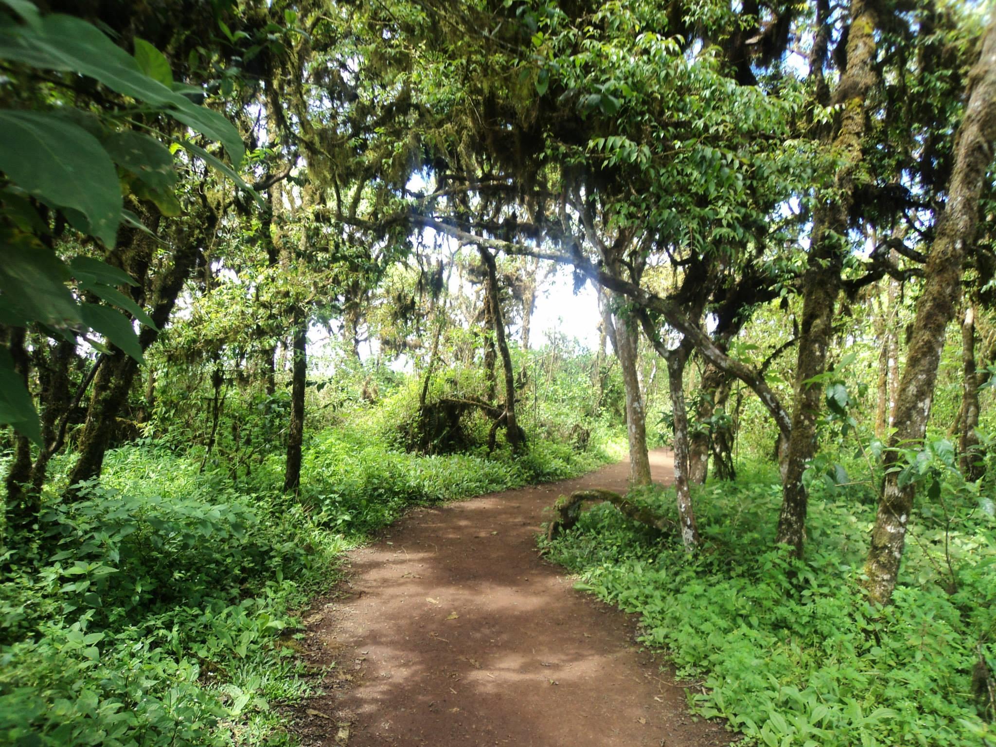 Agarrá en bici el camino al Muro de las Lagrimas.. Seguí un poco más, segui los senderos llenos de vegetación y vas a terminar en una playa divina