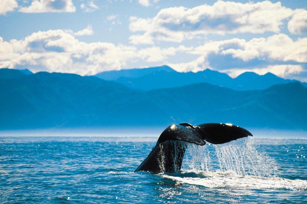 ballenas-isla-sur-nueva-zelanda