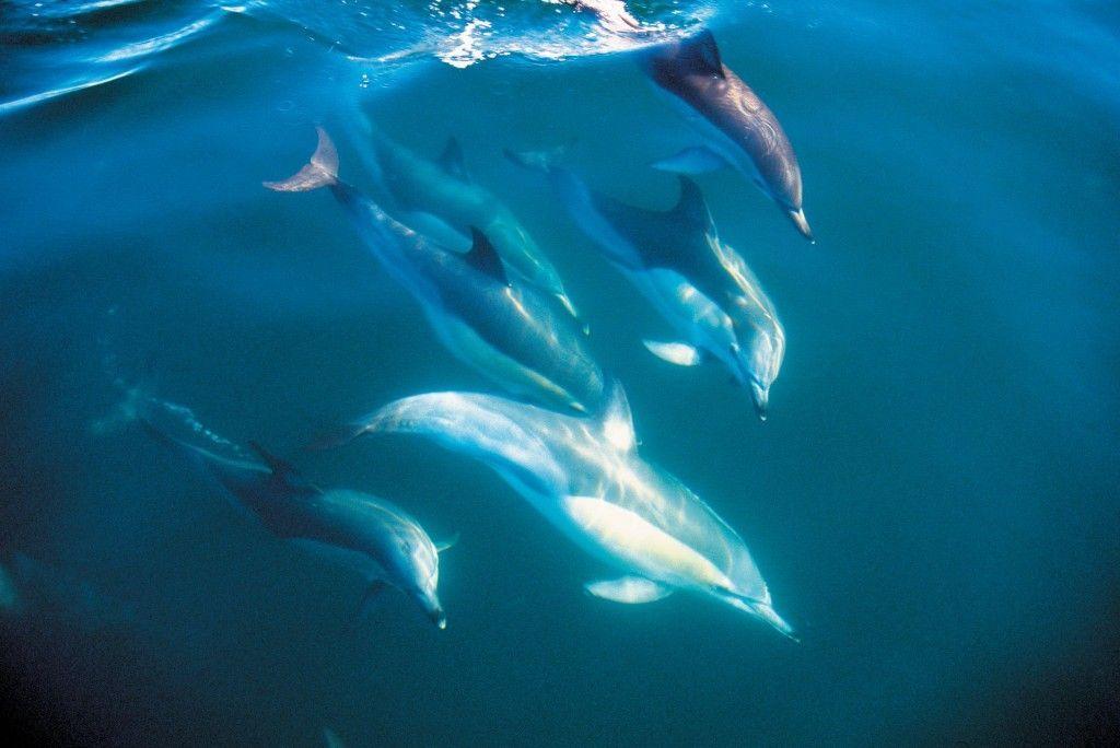 delfines-isla-norte-nueva-zelanda