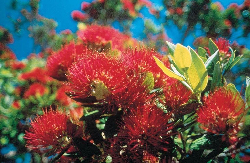 flora-nueva-zelanda