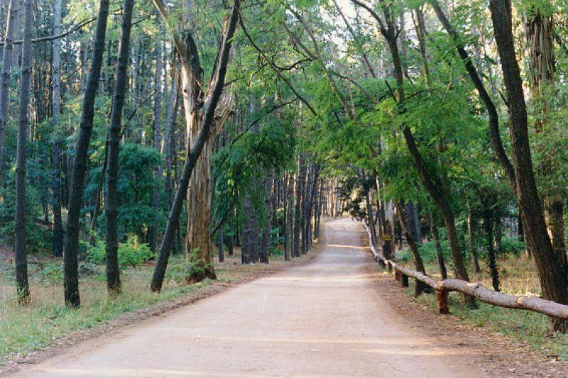 Bosque de Miramar