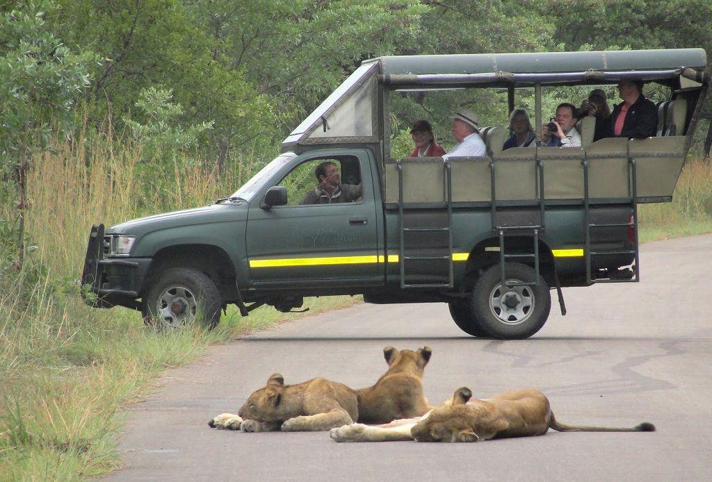 Leones en Sudafrica