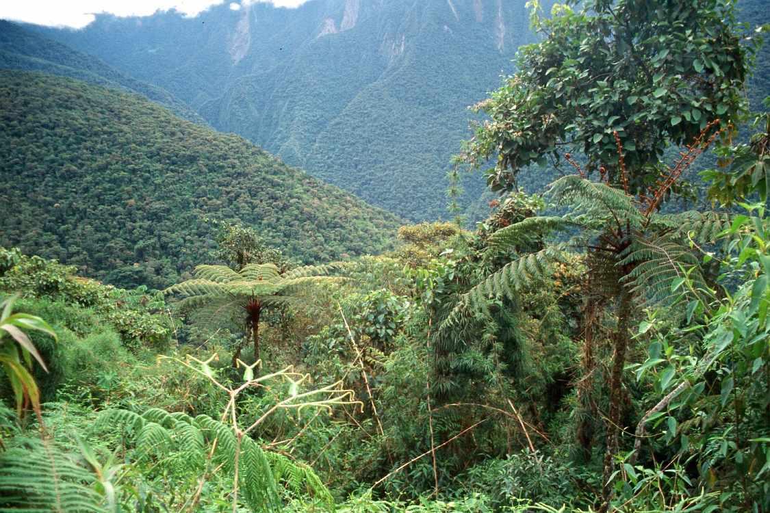 Montañas cubiertas de Selva en el Parque Nacional Baritú